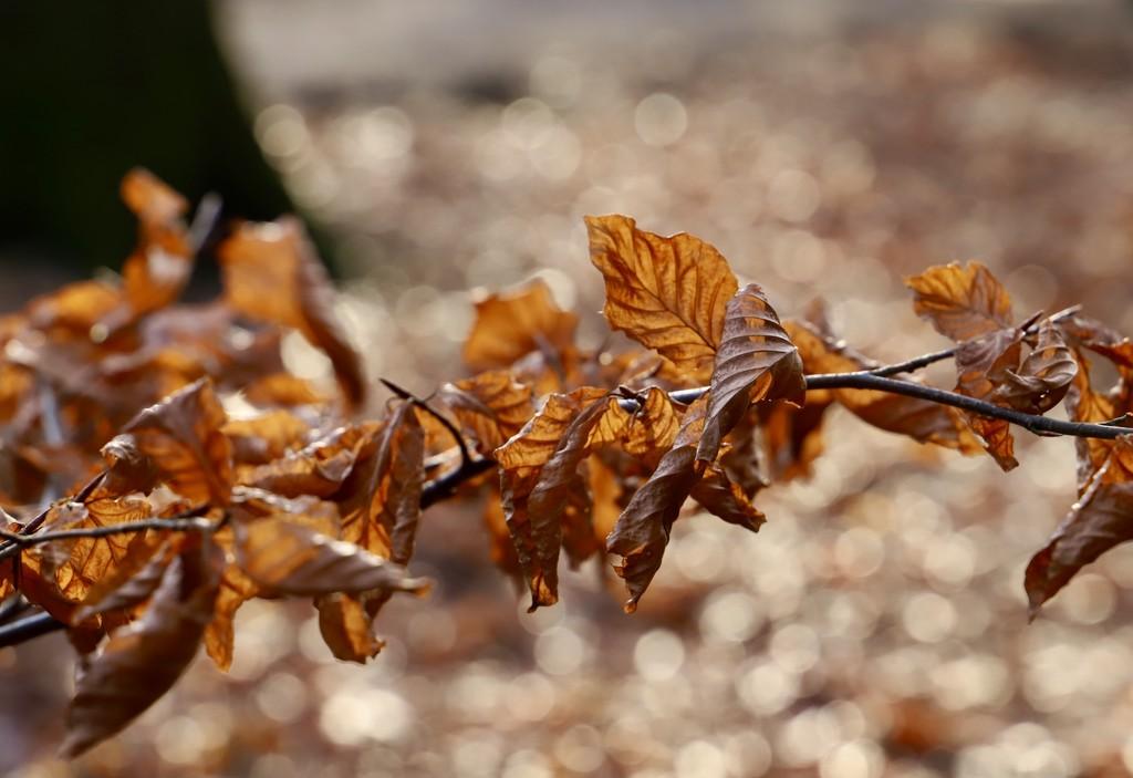 Leaves & Bokeh by carole_sandford