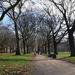 12th Dec Green Park