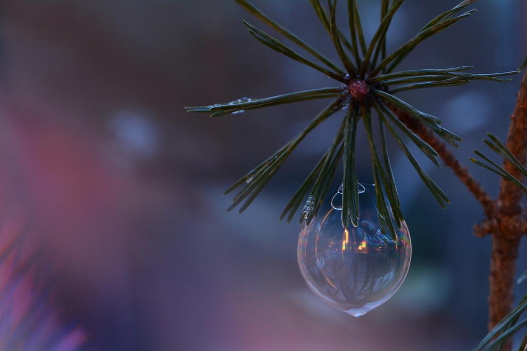 Bubble bauble........ by ziggy77