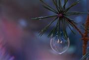 15th Dec 2019 - Bubble bauble........
