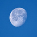 This Morning's Moon.