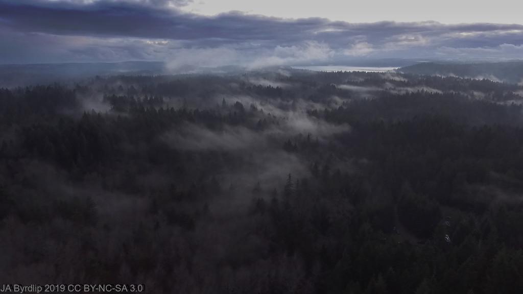 Fog Everywhere You Look by byrdlip