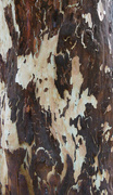 16th Dec 2019 - Tree Bark