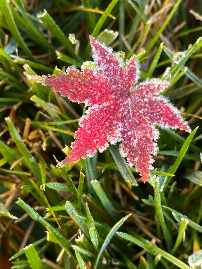 First Frost by shutterbug49