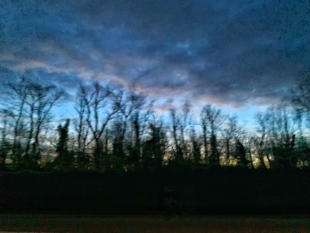 Tree silhouettes.  by cocobella
