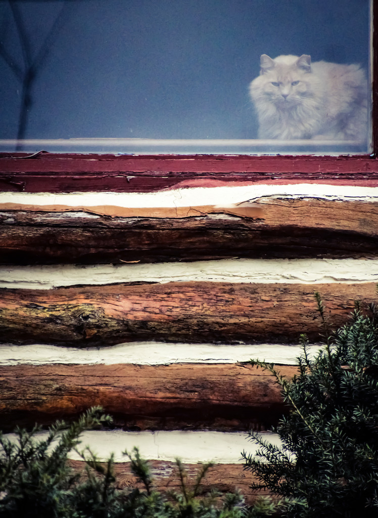 The Watcher in the Window by mzzhope