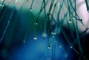 16th Dec 2019 - raindrops