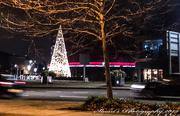 17th Dec 2019 - Christmas tree lights