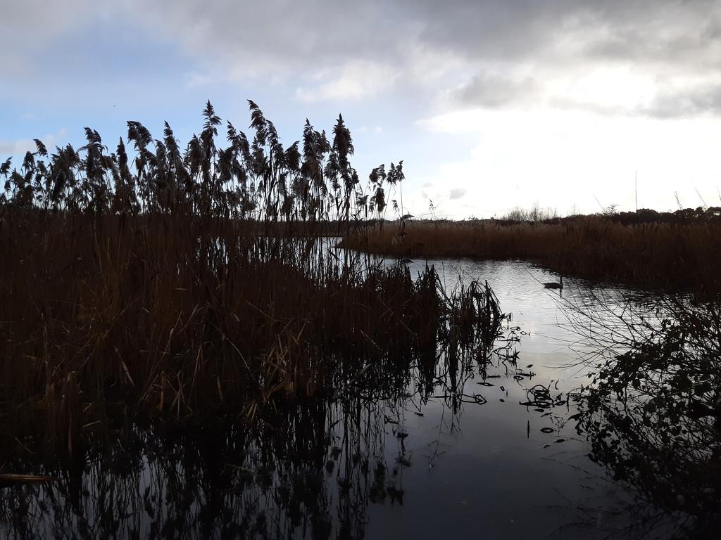 17th Dec contre jour Fleet Pond by valpetersen