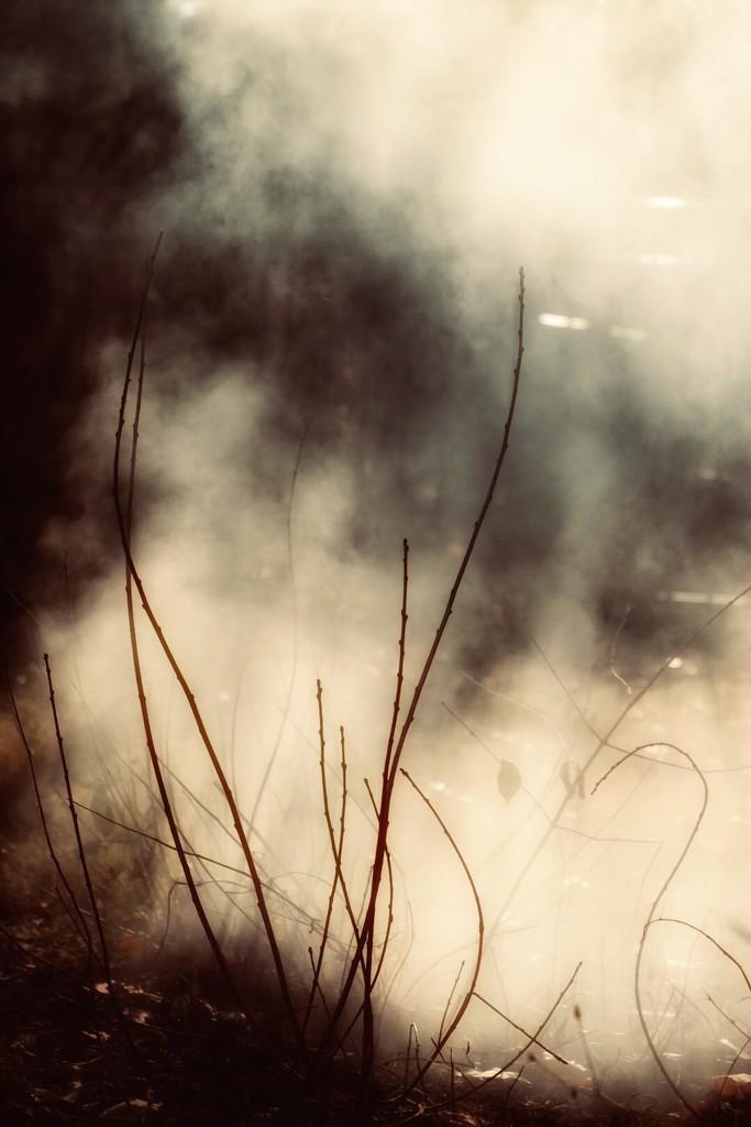 Apocalypse by vera365
