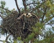 17th Dec 2019 - LHG_1266- Pa Berry exits the nest
