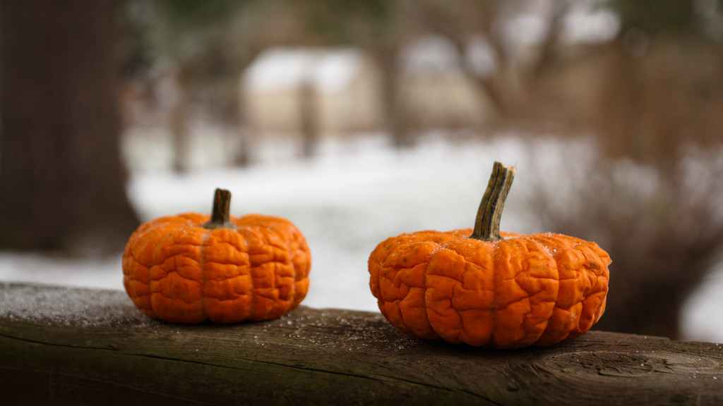 Frost on the Pumpkins by batfish