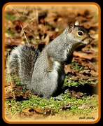 17th Dec 2019 - Excuse Me, Please.  I can't seem to find where I stashed my nuts.