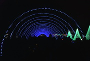 15th Dec 2019 - Holiday Light Tunnel