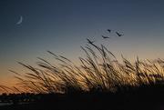 17th Dec 2019 - Meia Praia Sunset Beach