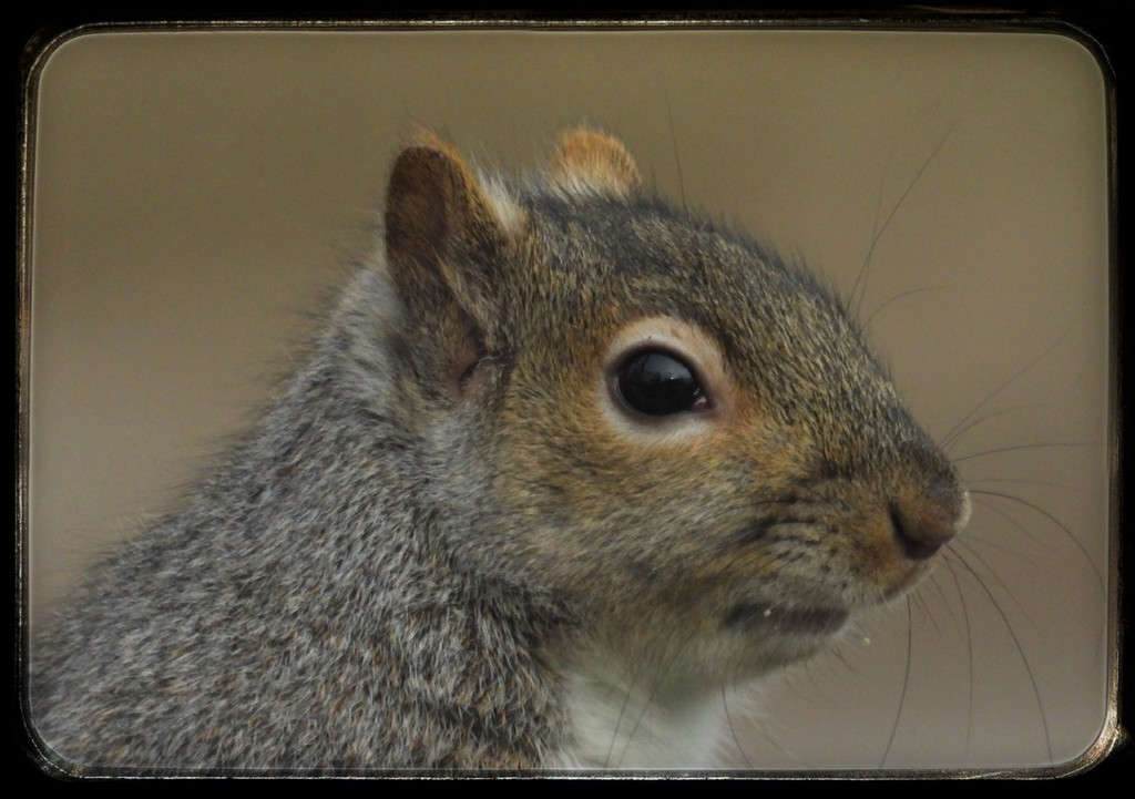 Portrait of a squirrel  by amyk