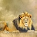Another one of the Big Five by ludwigsdiana