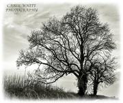 18th Dec 2019 - Bare Trees