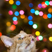 Griffin in Awe of Xmas Lights by mgmurray