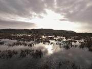 17th Dec 2019 - Winter wetlands
