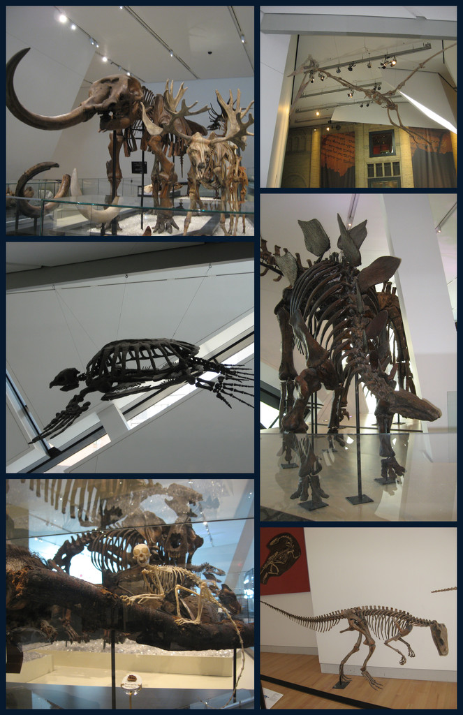 A Visit to the ROM by spanishliz