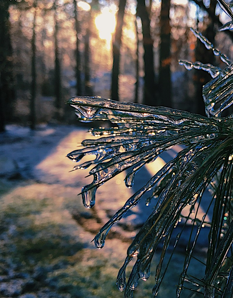 Day 352:  Icy #2 by sheilalorson