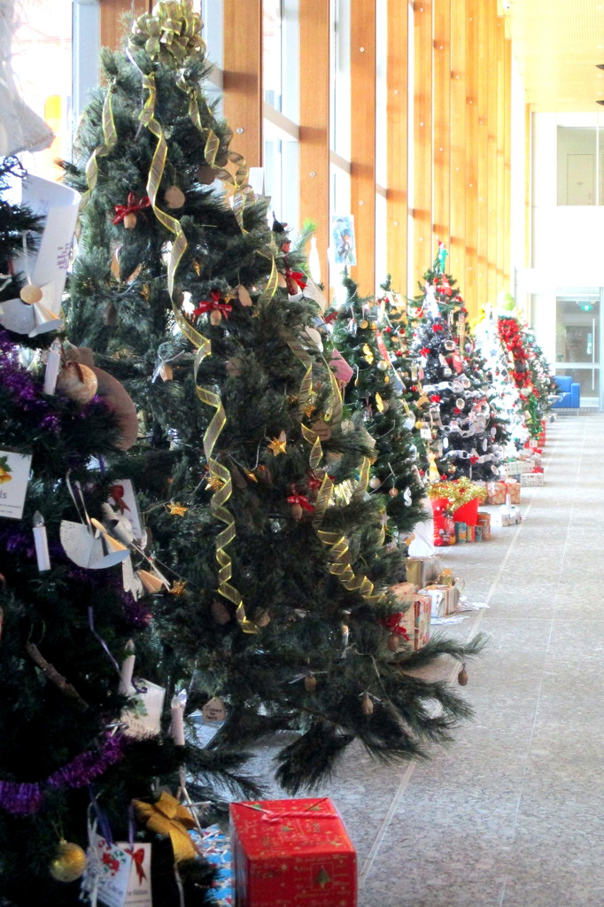 A line of Christmas trees in the foyer of the Sunshine Coast Hospital by 777margo
