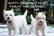 19th Dec 2019 - Happy Christmas from Finlay and George