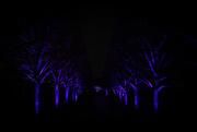 17th Dec 2019 - Tree Lane