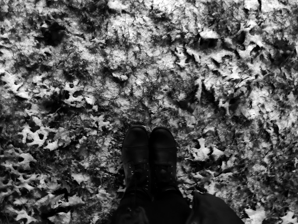 leaves and snow...  in the dark... by northy