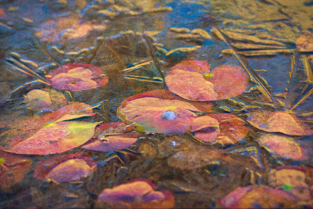 Water Lillies under glass by samae
