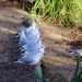 Pigeons on Parade! by carole_sandford