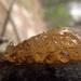 Amber slug??