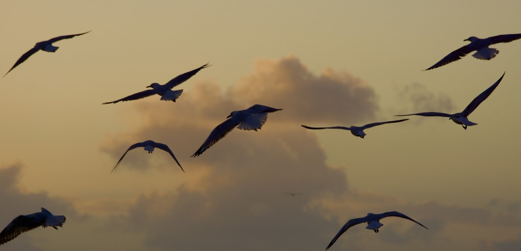 Flying Into The Sunset DSC_6235 by merrelyn