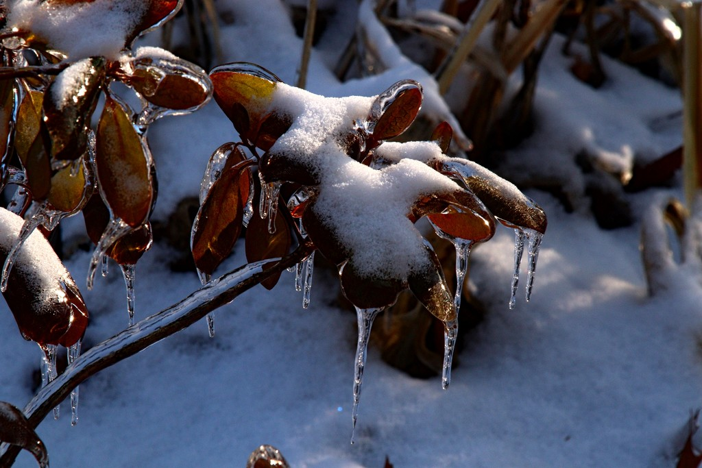 Day 354:  Icy #4 by sheilalorson