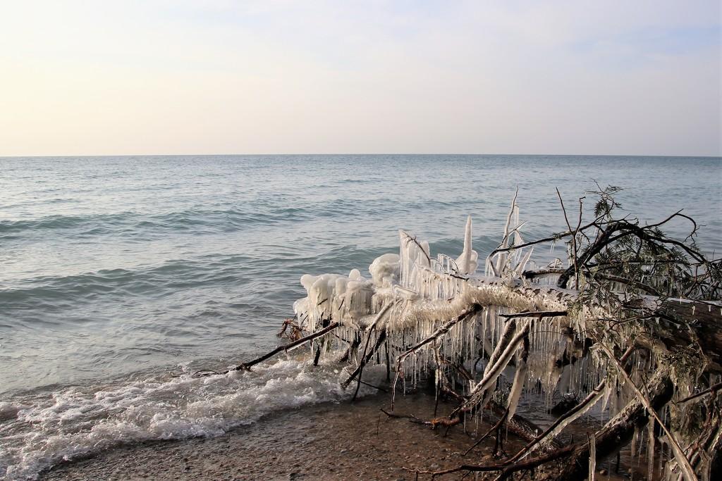 icy tree by edorreandresen