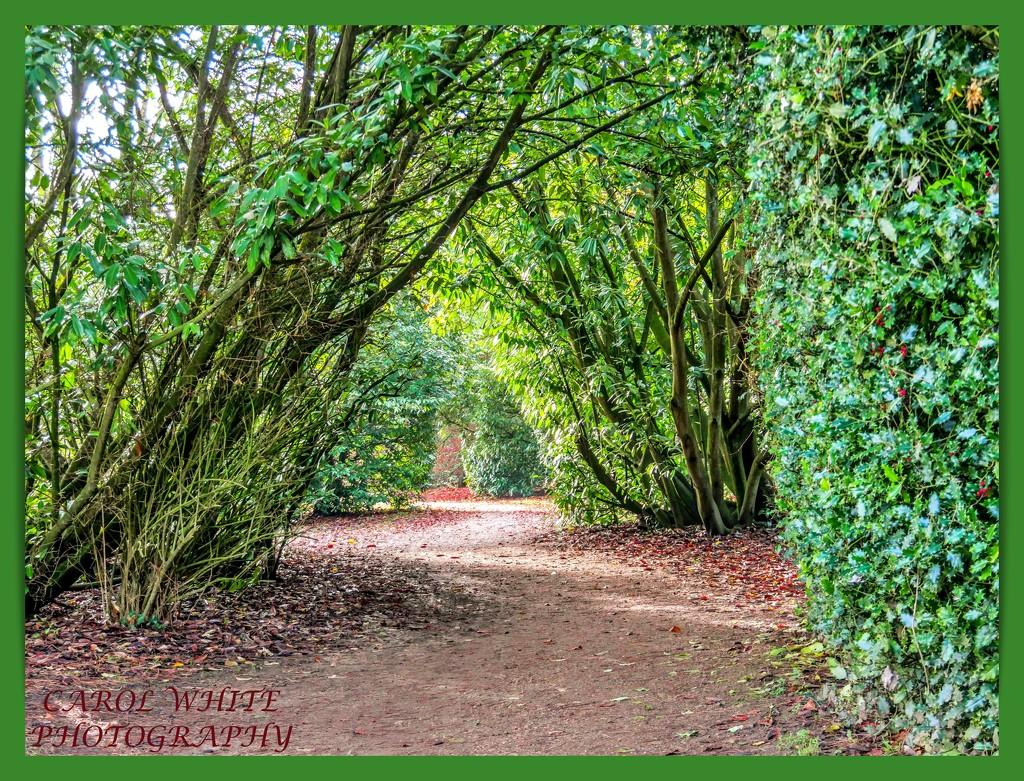 The Winding Path by carolmw