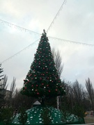 21st Dec 2019 - Christmas tree of our town