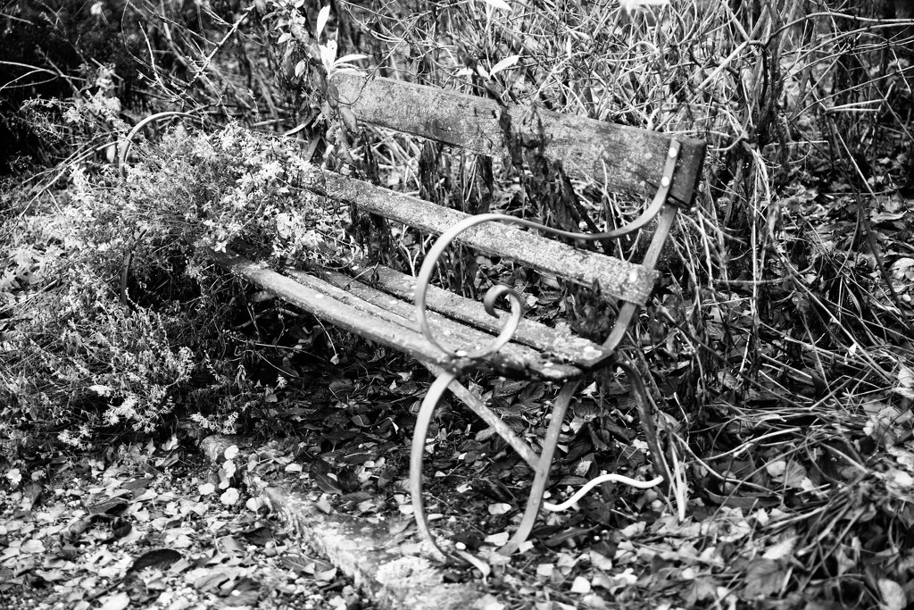 Rustic Bench  by phil_sandford