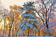 21st Dec 2019 - Decorated Pine