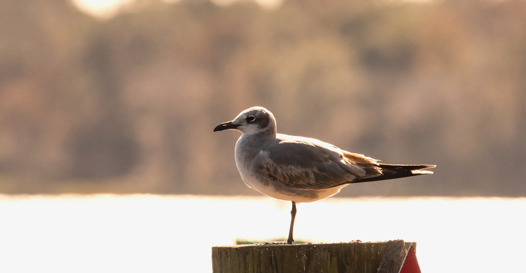 Seagull In Yoga Mode! by rickster549