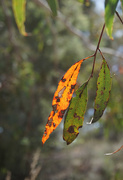 7th Dec 2019 - Leaves