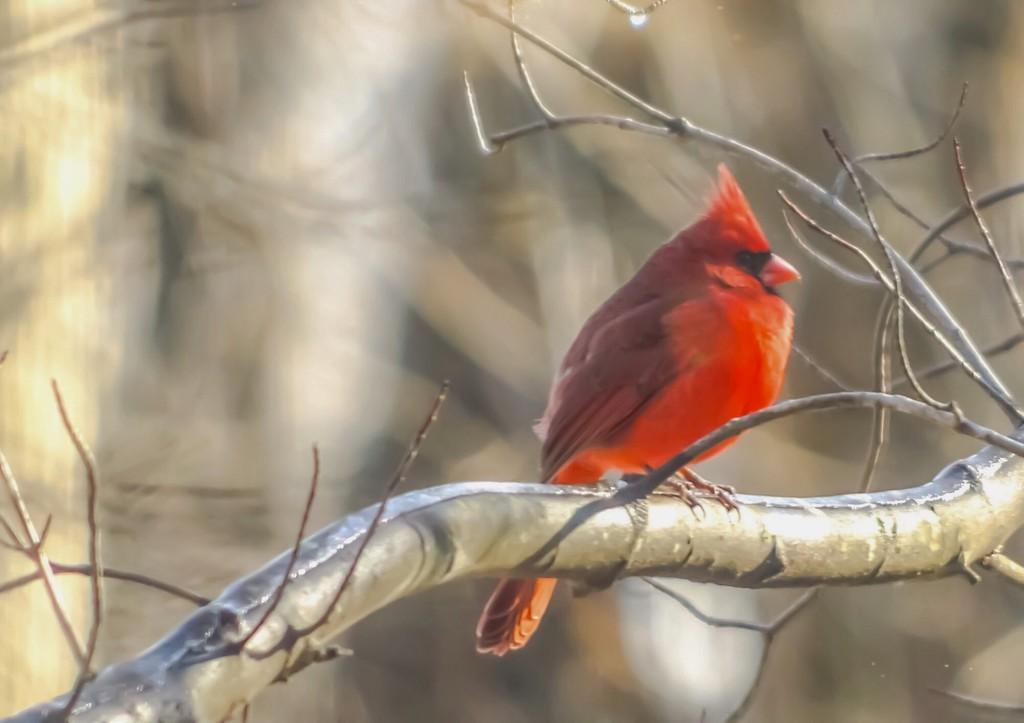 My Little Red Friend  by mzzhope
