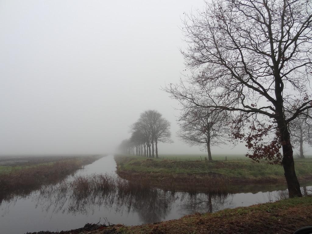A grey day by gijsje