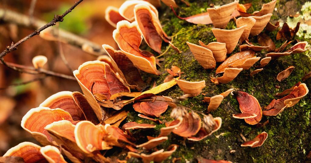 Fungi Chips! by rickster549
