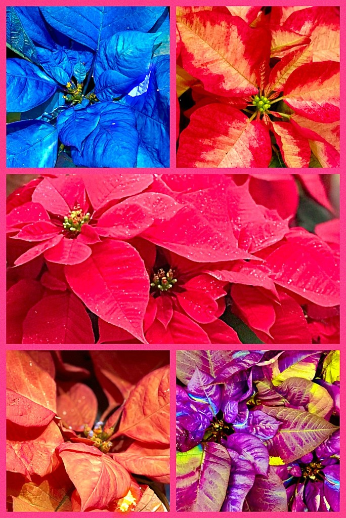 Christmas of Many Colors by gardenfolk