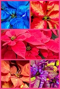 23rd Dec 2019 - Christmas of Many Colors