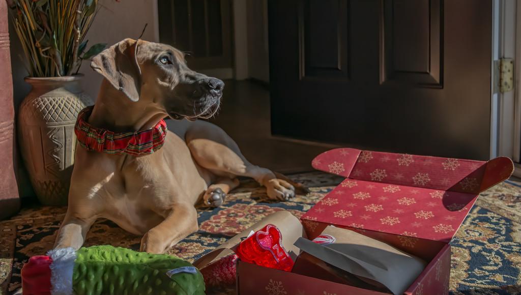 Dori and her pup box  by samae