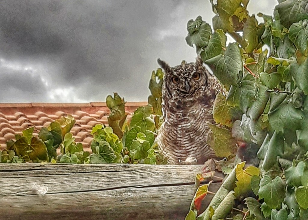 In the vine  by salza