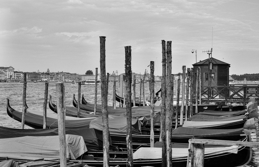 Venice by brigette